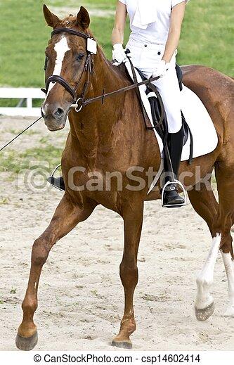 dressage horse and rider - csp14602414