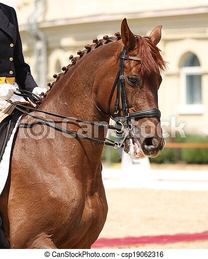 dressage horse and rider - csp19062316