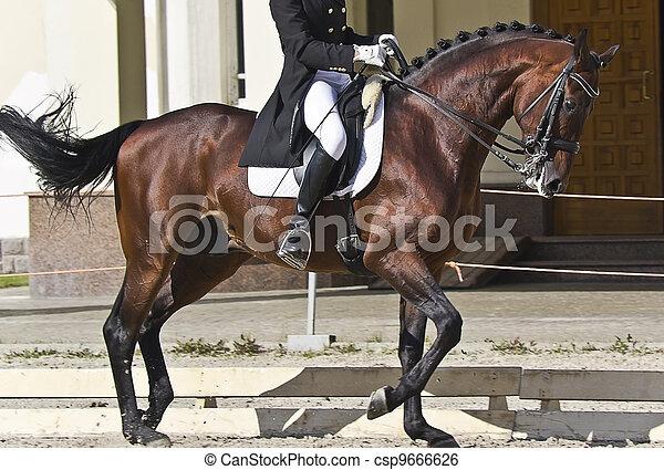 dressage horse and rider - csp9666626