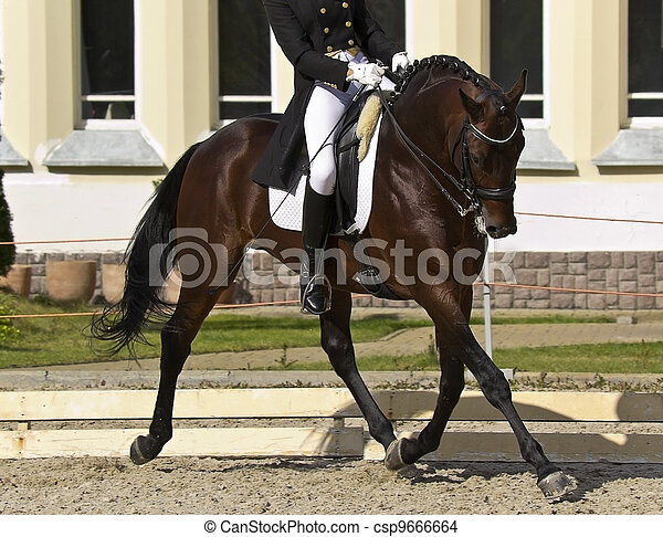 dressage horse and rider - csp9666664