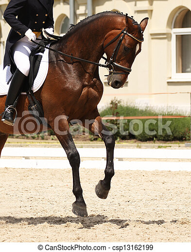dressage horse and rider - csp13162199
