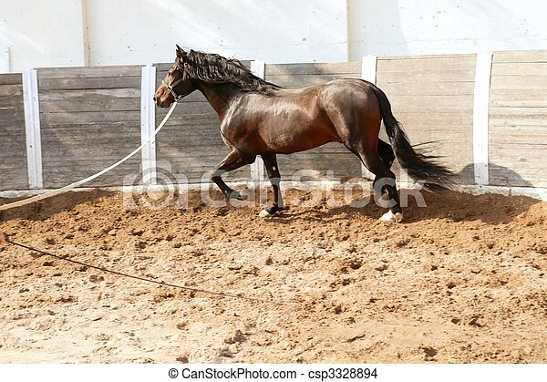 Dressage horse in round arenas with rope - csp3328894