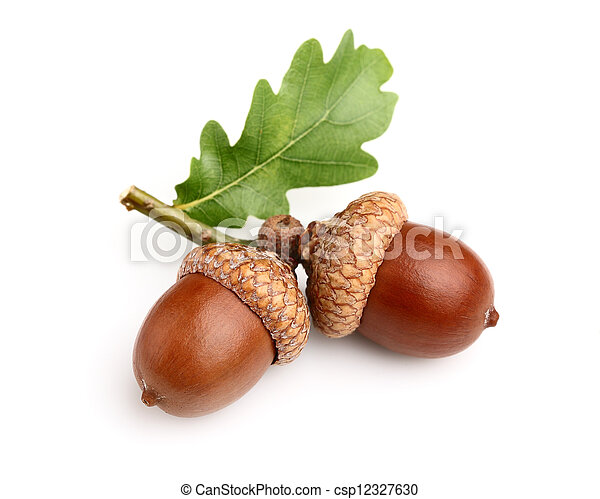 Dried acorns with leaf - csp12327630