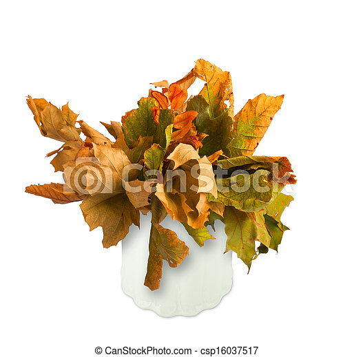 Dried bouquet of autumn leaves in a vase isolated on white background - csp16037517