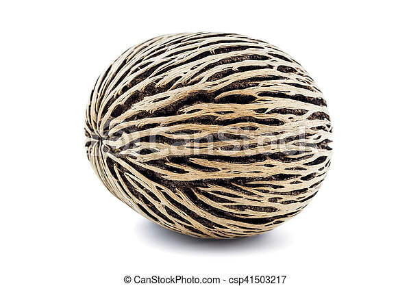 dried cerbera oddloam's seed, pong pong seed on white background. - csp41503217