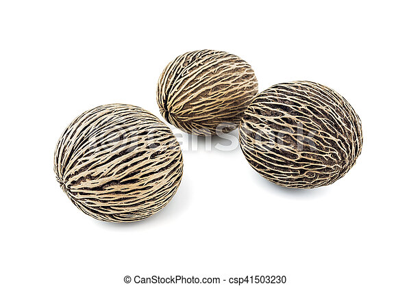 dried cerbera oddloam's seeds, pong pong seeds on white background. - csp41503230