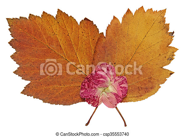 dried fall leaves of plants - csp35553740