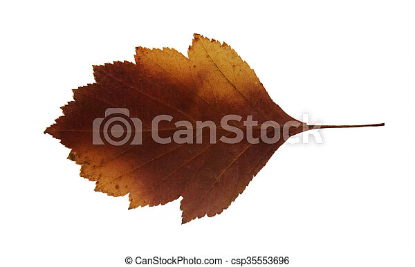 dried fall leaves of plants - csp35553696