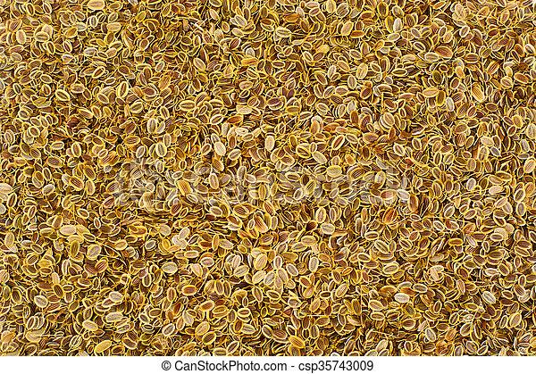 Dried Fennel Seeds - csp35743009