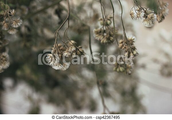 dried flowers - csp42367495