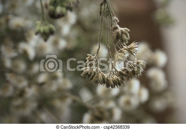 dried flowers - csp42368339
