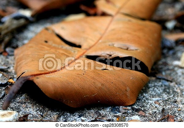 Dried leaves - csp28308570