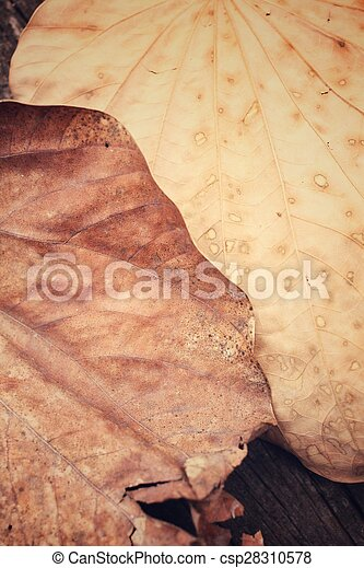 Dried leaves - csp28310578