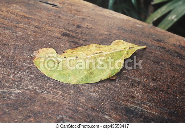Dried leaves - csp43553417