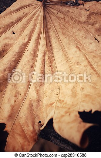 Dried leaves - csp28310588