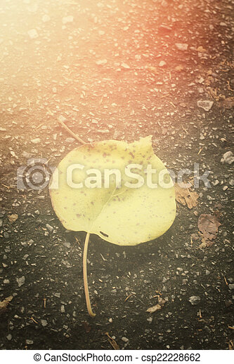 Dried leaves - csp22228662