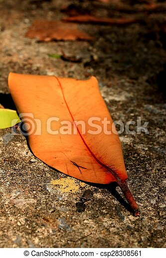 Dried leaves - csp28308561