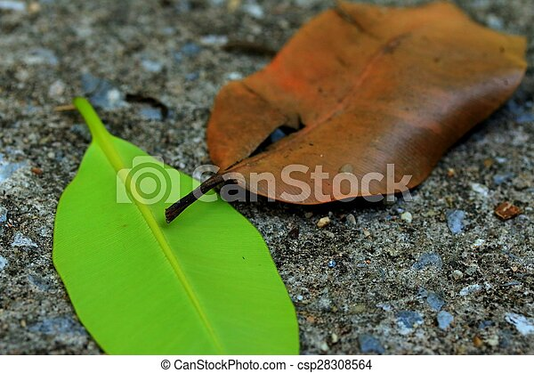 Dried leaves - csp28308564