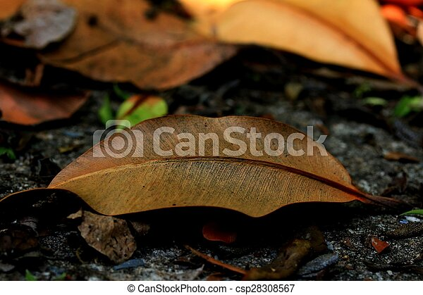 Dried leaves - csp28308567