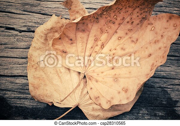 Dried leaves - csp28310565
