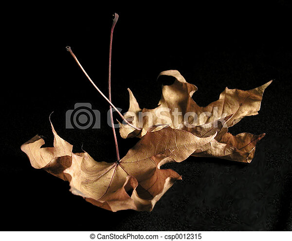 Dried Leaves - csp0012315