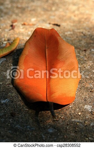 Dried leaves - csp28308552