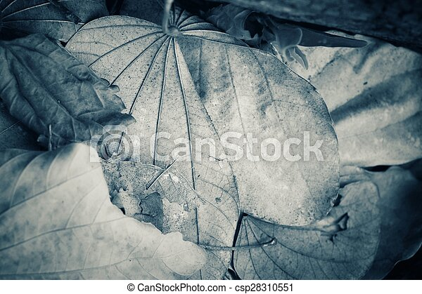 Dried leaves - csp28310551