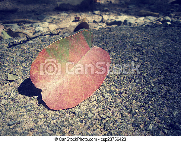 Dried leaves - csp23756423