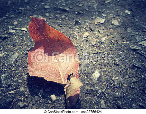 Dried leaves - csp23756424