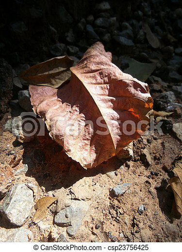 Dried leaves - csp23756425