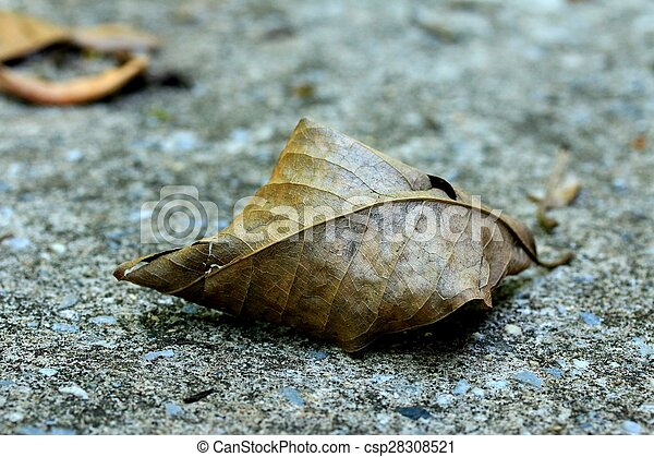 Dried leaves - csp28308521