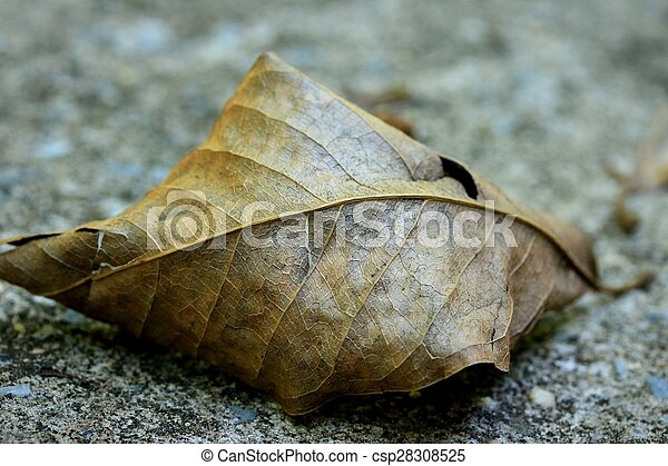 Dried leaves - csp28308525
