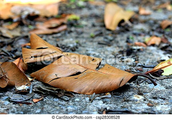 Dried leaves - csp28308528