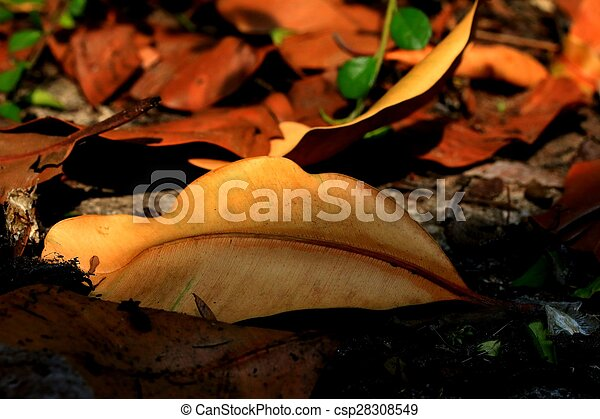 Dried leaves - csp28308549