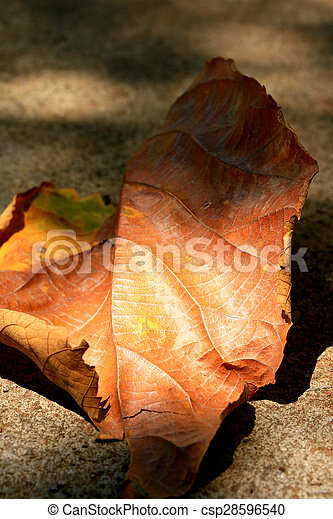 Dried leaves - csp28596540