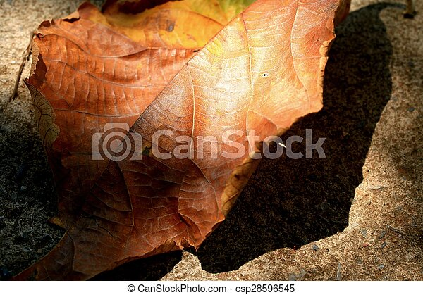 Dried leaves - csp28596545