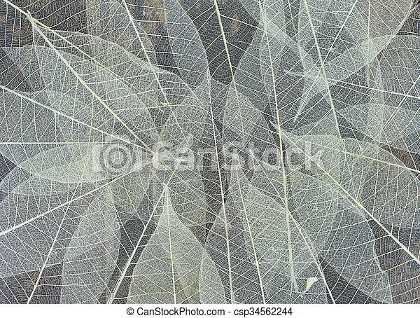 Dried leaves - csp34562244