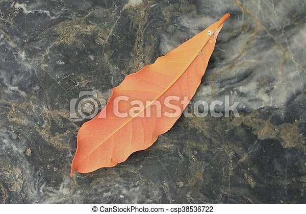 Dried leaves - csp38536722