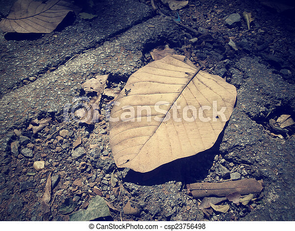 Dried leaves - csp23756498