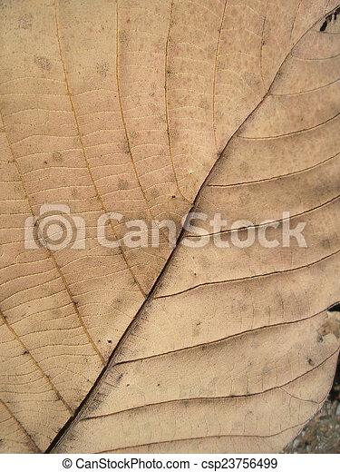 Dried leaves - csp23756499