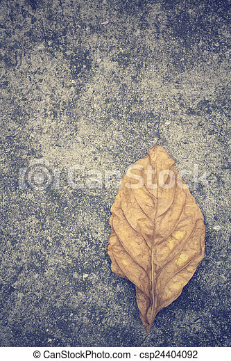 Dried leaves - csp24404092