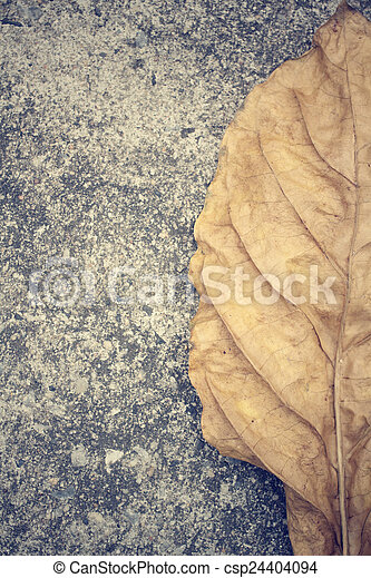 Dried leaves - csp24404094