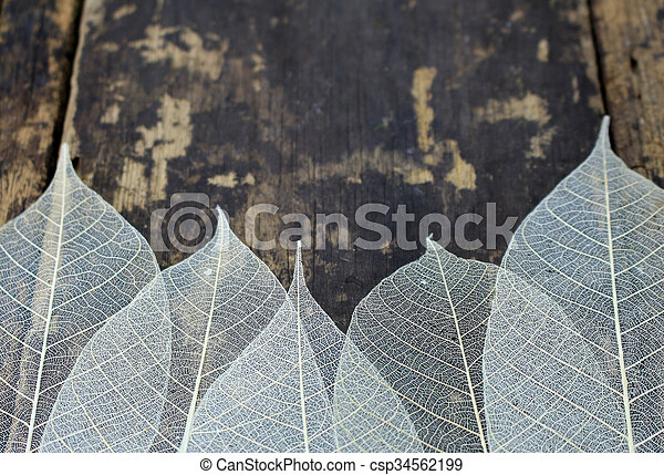 Dried leaves - csp34562199