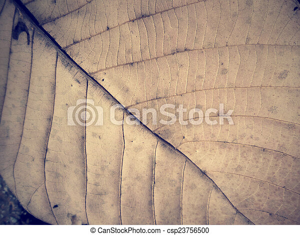 Dried leaves - csp23756500