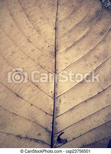 Dried leaves - csp23756501