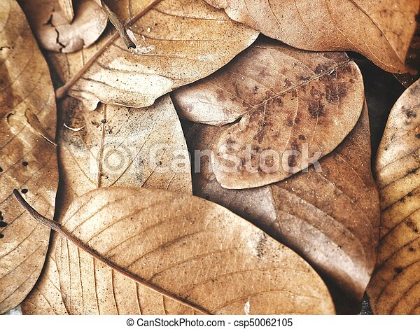 Dried leaves - csp50062105