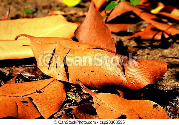 Dried leaves - csp28308535