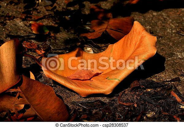 Dried leaves - csp28308537