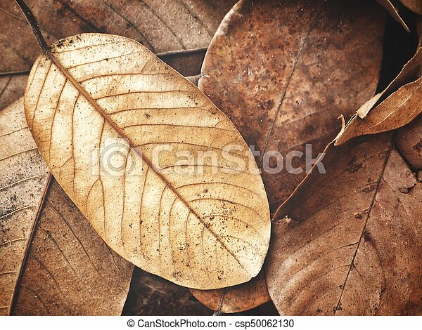 Dried leaves - csp50062130