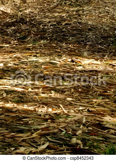 Dried leaves - csp8452343